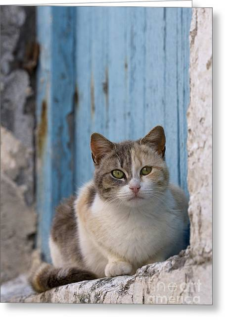 Dilute Greeting Cards - Cat In A Doorway, Greece Greeting Card by Jean-Louis Klein & Marie-Luce Hubert