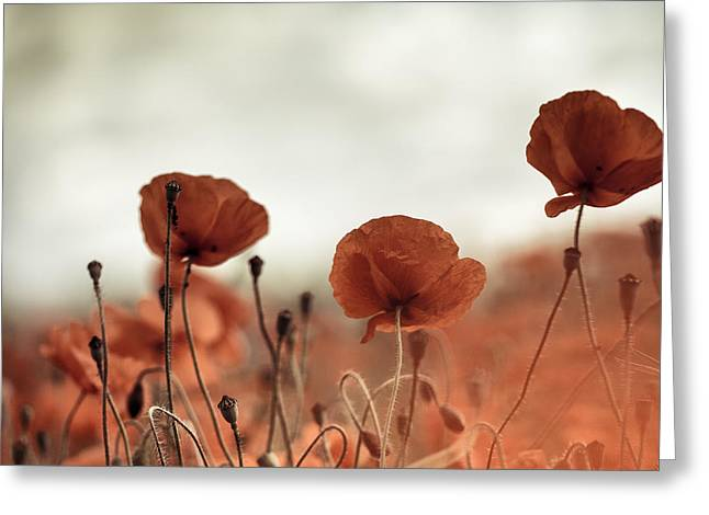 Poppy Meadow Greeting Card by Nailia Schwarz