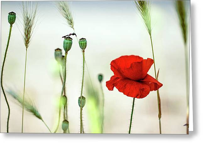 Summer Poppy Meadow Greeting Card by Nailia Schwarz