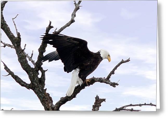 Bald Eagle Greeting Card by Lori Tordsen