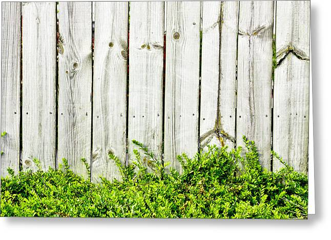 Creepers Greeting Cards - Fence panels Greeting Card by Tom Gowanlock