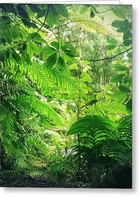 Raining Greeting Cards - Jungle leaves Greeting Card by Les Cunliffe
