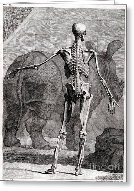 Rhinoceros Greeting Cards - 18th Century Anatomical Engraving Greeting Card by Science Source
