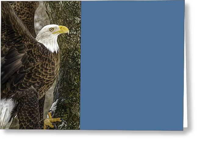American Bald Eagle 1 Greeting Card by LeeAnn McLaneGoetz McLaneGoetzStudioLLCcom