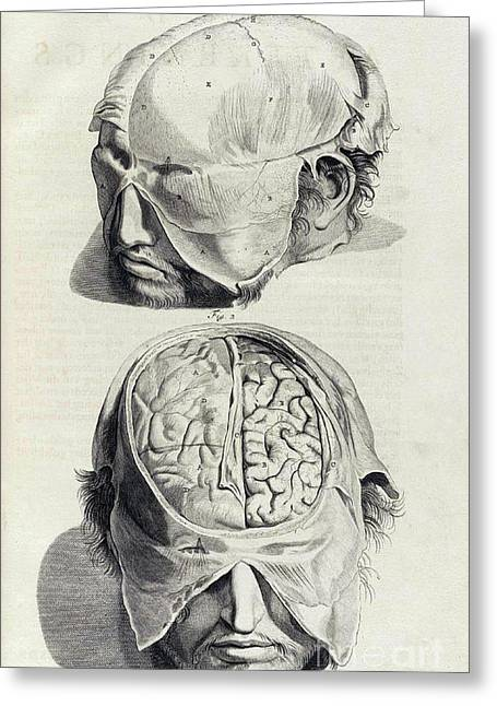 Naturalistic Greeting Cards - Anatomia Humani Corporis, Table 05, 1690 Greeting Card by Science Source