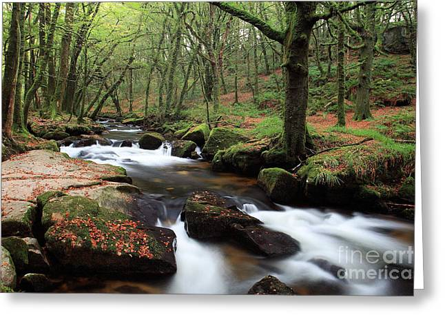 Autumn At Golitha Falls Greeting Card by Carl Whitfield