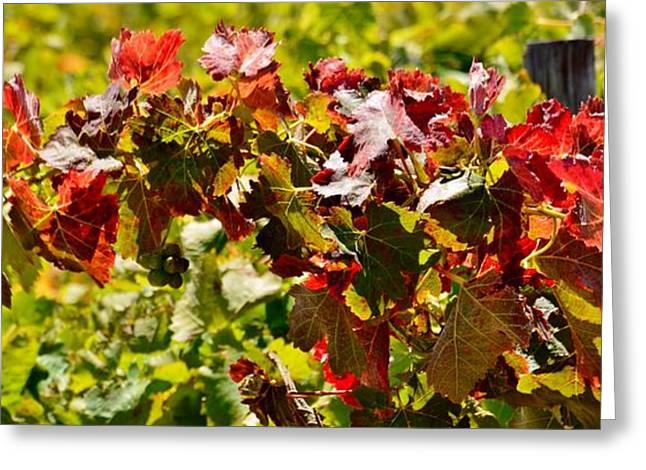 Stellenbosch Greeting Cards - Autumn leafs Greeting Card by Werner Lehmann