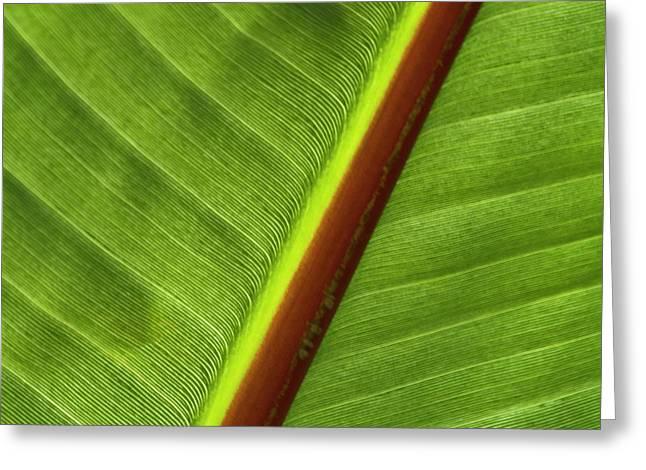 Banana Leaf Greeting Card by Heiko Koehrer-Wagner