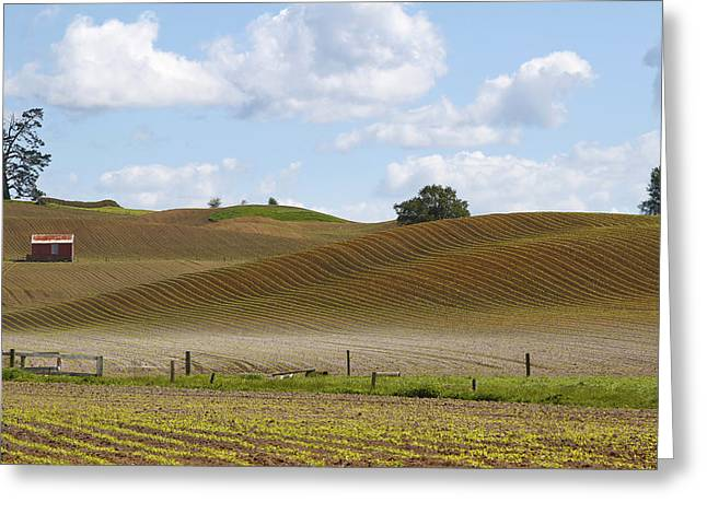 Cornfield Greeting Cards - Barn in field Greeting Card by Les Cunliffe