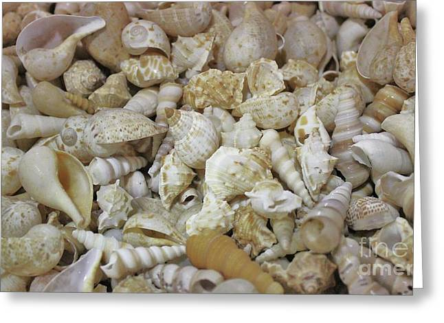 Beautiful Sea Shells Greeting Card by Paulette Thomas