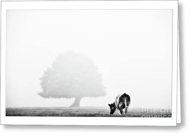 Cattle Photographs Greeting Cards - Black And White Nature Landscape Photography Art Work Greeting Card by Marco Hietberg