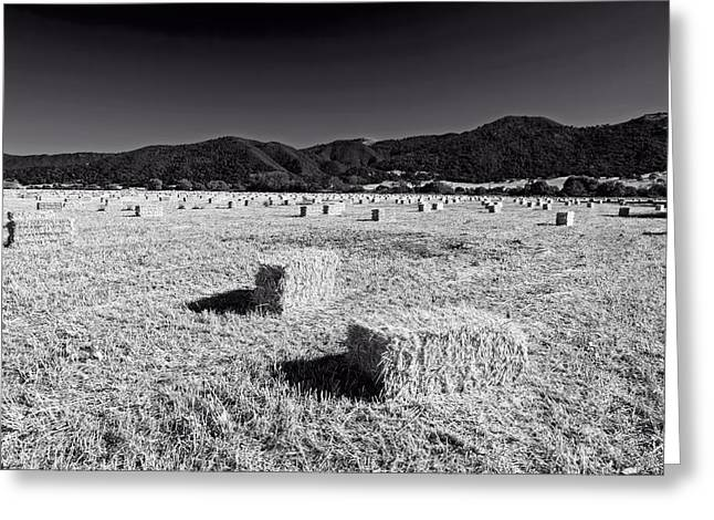 Hay Bales Greeting Cards - California Hay Field Greeting Card by Mountain Dreams