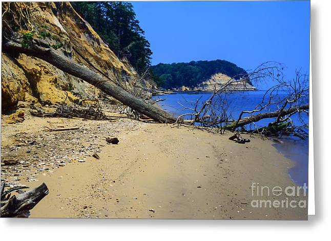 Miocene Greeting Cards - Calvert Cliffs State Park Greeting Card by Thomas R Fletcher