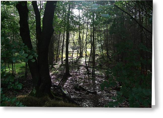 Cannock Chase Greeting Cards - Cannock Chase Forest Greeting Card by Jean Walker