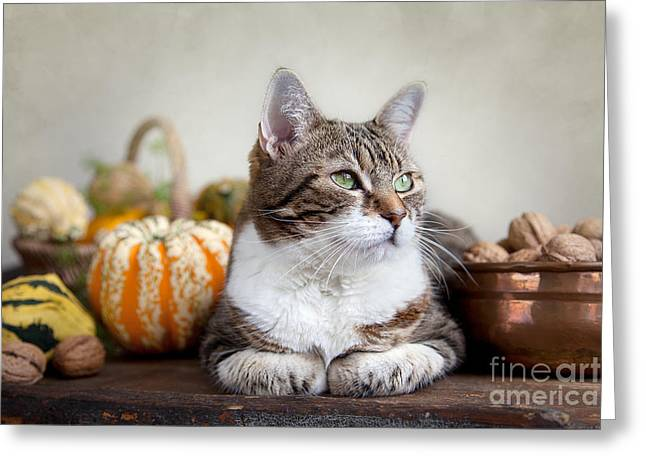 Fat Greeting Cards - Cat and Pumpkins Greeting Card by Nailia Schwarz