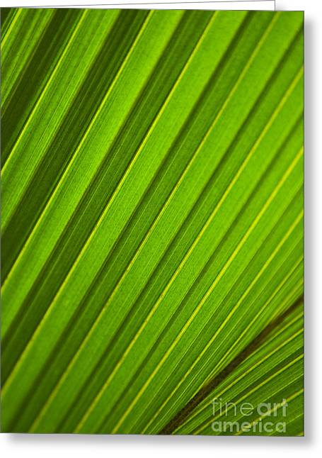 Recently Sold -  - Nature Abstract Greeting Cards - Coconut Palm Leaf Greeting Card by Dana Edmunds - Printscapes