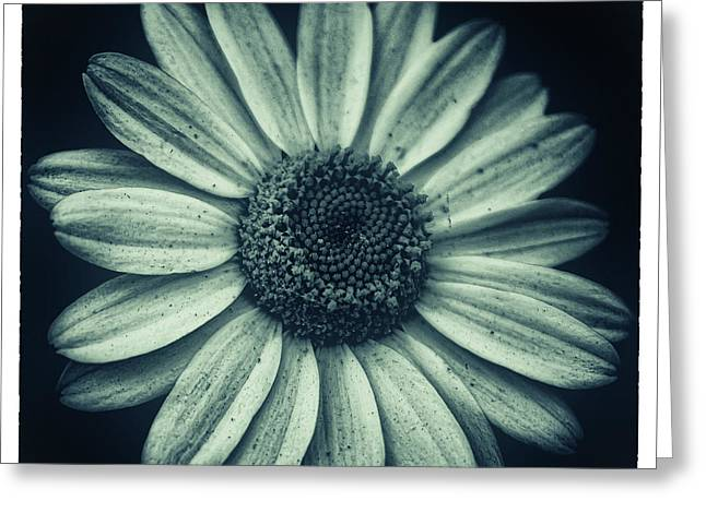 Daisy Greeting Card by Martin Newman