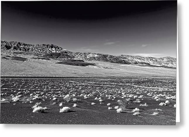 Scrub Brush Greeting Cards - Death Valley Greeting Card by Mountain Dreams