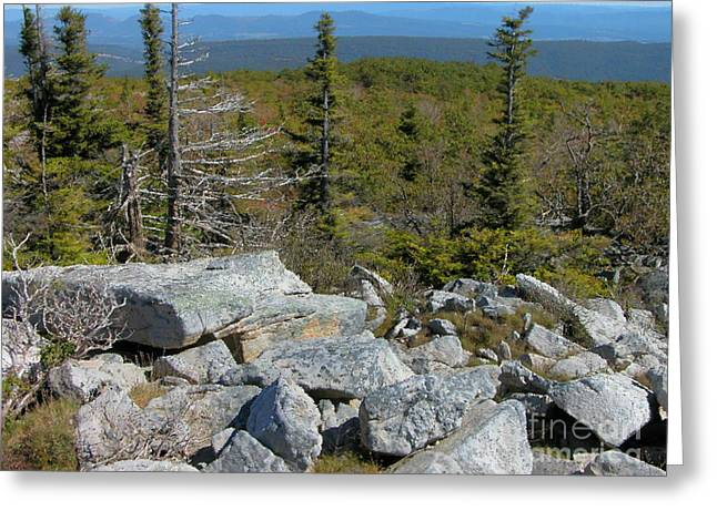 Hiking Digital Greeting Cards - Dolly Sods Wilderness Greeting Card by Thomas R Fletcher