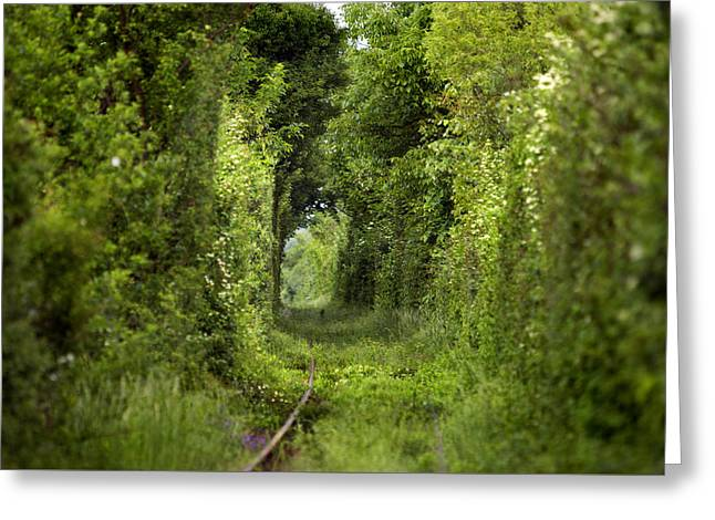 Garden Scene Greeting Cards - Famous Tunnel of Love location Greeting Card by Sandra Rugina