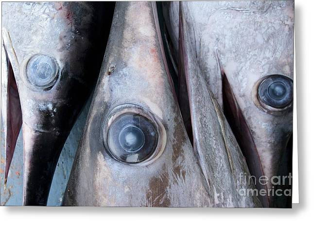 Swordfish Photographs Greeting Cards - Freshly Caught Swordfish Greeting Card by Angel Fitor