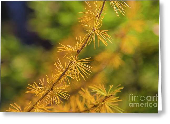 Golden Autumn Greeting Card by Veikko Suikkanen