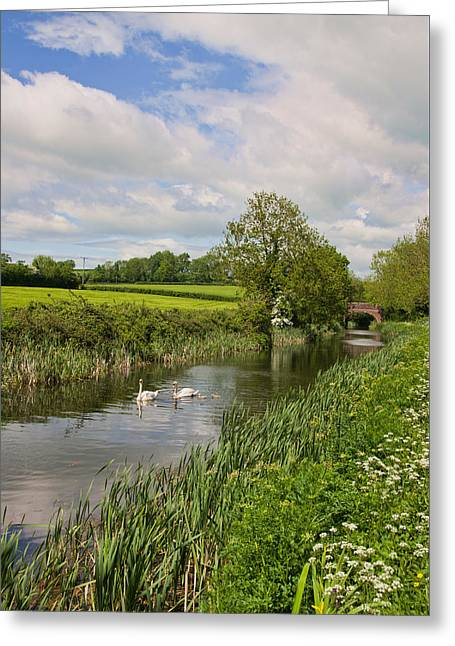 Peverell Greeting Cards - Grand Western Canal Greeting Card by Pete Hemington