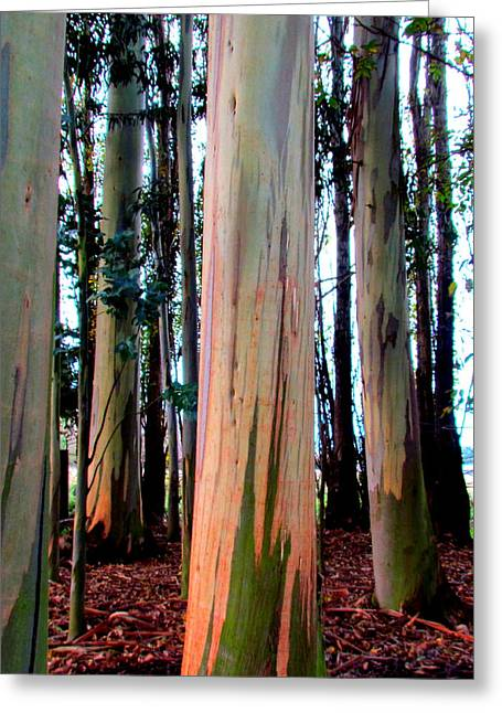 Greeting Cards - Gum Trees  Greeting Card by Joyce Woodhouse