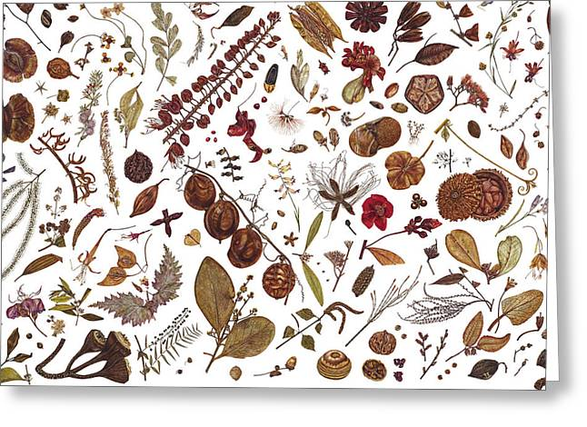 Various Greeting Cards - Herbarium Specimen Greeting Card by Rachel Pedder-Smith