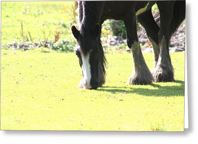 Horse Greeting Card by Frances Lewis