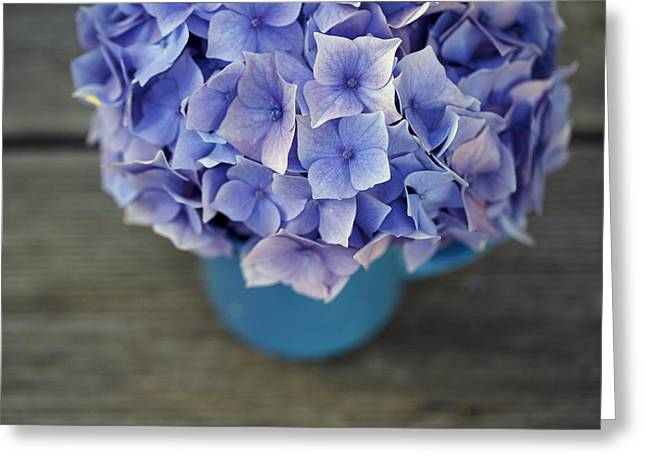 Hortensia Flowers Greeting Card by Nailia Schwarz