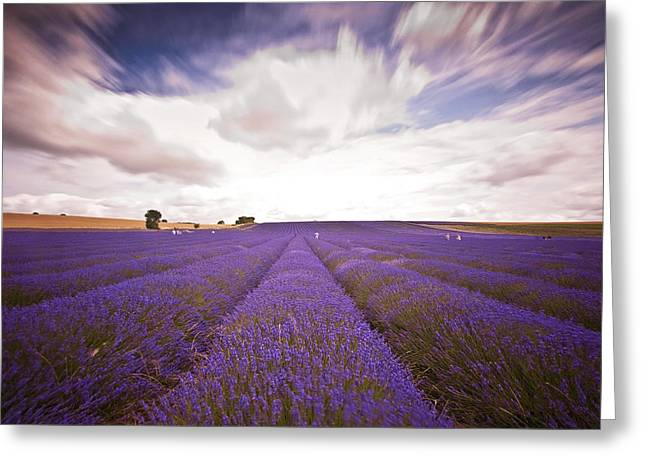 Hitchin Greeting Cards - Lavender Field Greeting Card by Graham Custance