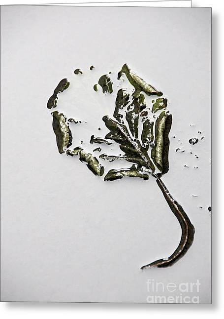 Elevated Greeting Cards - Leaf Greeting Card by Bernard Jaubert
