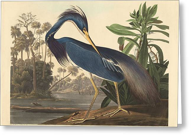 Shorebird Greeting Cards - Louisiana Heron Greeting Card by John James Audubon