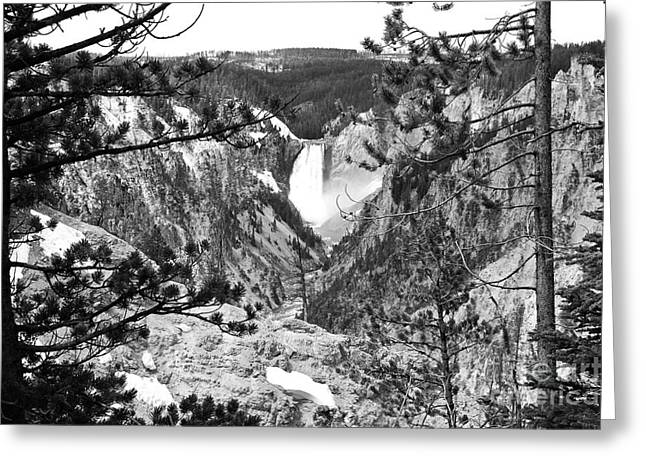 Famous Artist Greeting Cards - Lower Falls from Artist Point Yellowstone National Park Wyoming Black and White Greeting Card by Shawn O
