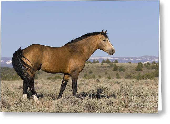 Swishes Greeting Cards - Mustang Stallion Greeting Card by Jean-Louis Klein & Marie-Luce Hubert