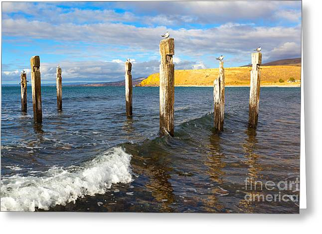 Tern Greeting Cards - Myponga Beach Jetty Ruins Greeting Card by Bill  Robinson
