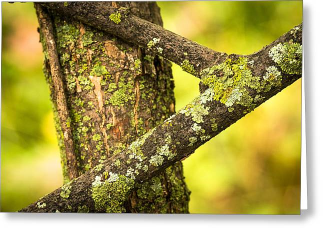 Lichen Photo Greeting Cards - Lichen Covered Dead Tree Branches Greeting Card by Donald  Erickson