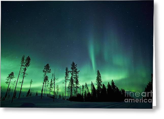 Forest At Night Greeting Cards - Northern Lights Greeting Card by Jeremy Walker