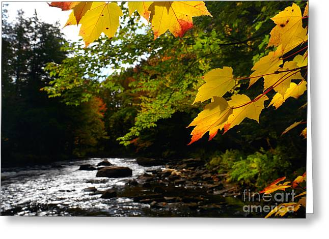 Ontario Autumn Scenery Greeting Card by Oleksiy Maksymenko