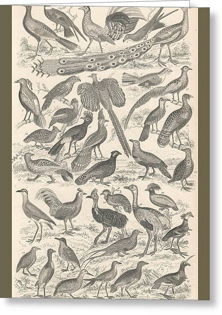 Songbird Prints Greeting Cards - Ornithology Greeting Card by Captn Brown