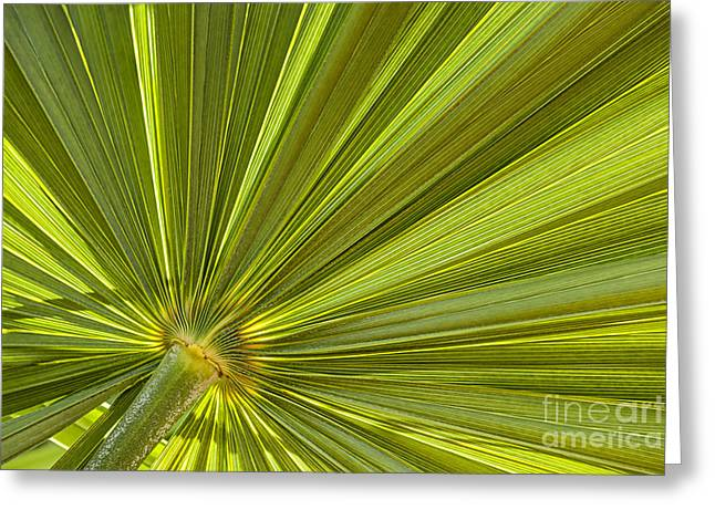 Palm Leaf Greeting Card by Elena Elisseeva