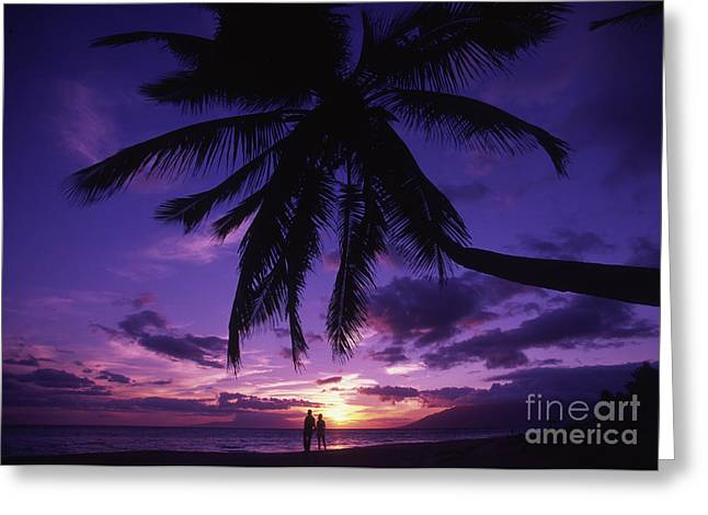Holden Beach Greeting Cards - Palm Over The Beach Greeting Card by Ron Dahlquist - Printscapes