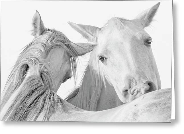 Pals Greeting Card by Ron  McGinnis
