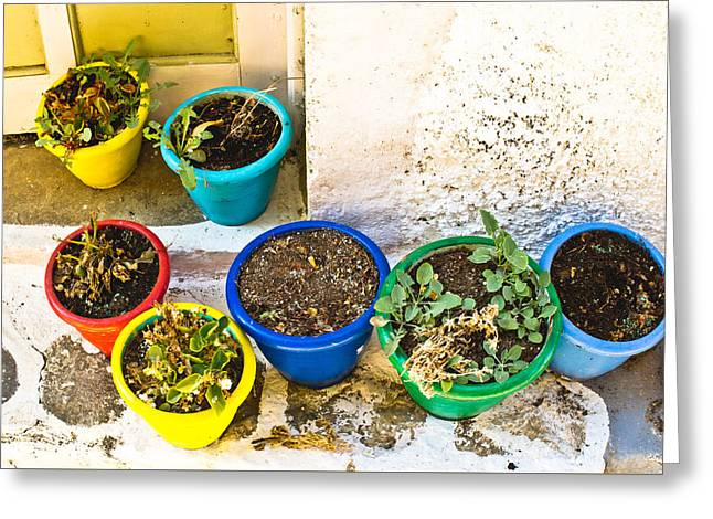 Compost Greeting Cards - Plant pots Greeting Card by Tom Gowanlock
