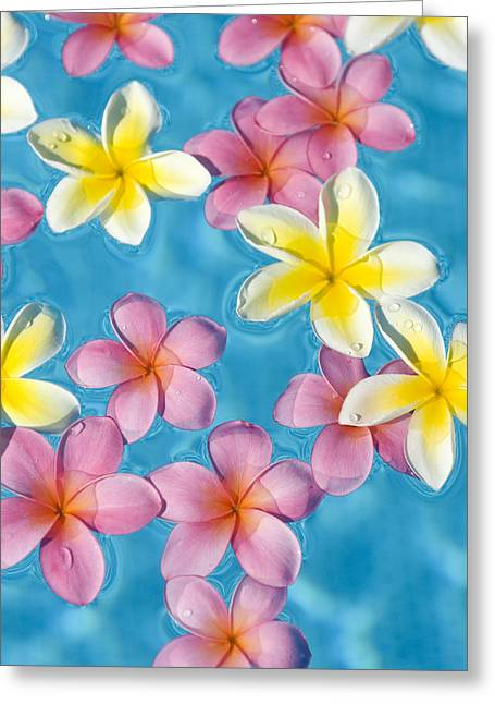 Plumerias Floating Greeting Card by Ron Dahlquist - Printscapes