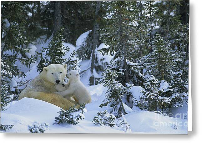 Caring Mother Greeting Cards - Polar Bear And Cubs Greeting Card by Jean-Louis Klein & Marie-Luce Hubert