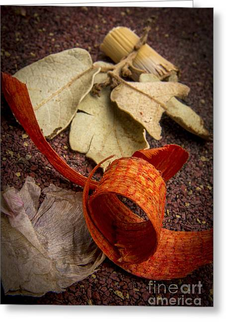 Fragility Photographs Greeting Cards - Potpourri Greeting Card by Bernard Jaubert