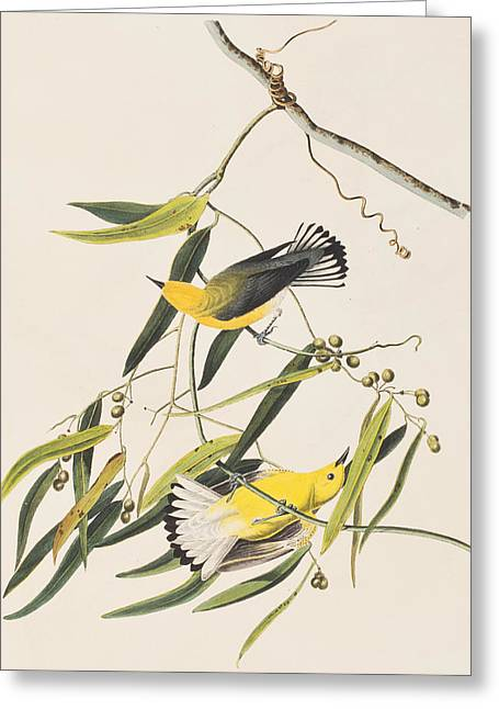 Warblers Greeting Cards - Prothonotary Warbler Greeting Card by John James Audubon
