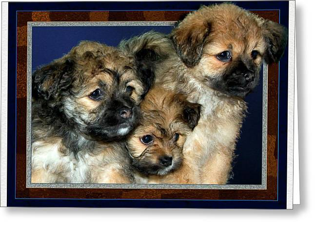 3 Pups Greeting Card by Harry Hunsberger